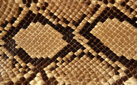 Animal Skin Wallpaper - wallpapers snake skin wallpapers