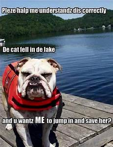 60 Funniest Animal Pictures With Captions | Fun To Move In USA