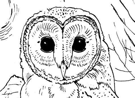 barn owl fingerpuppet  color sheet owls rock