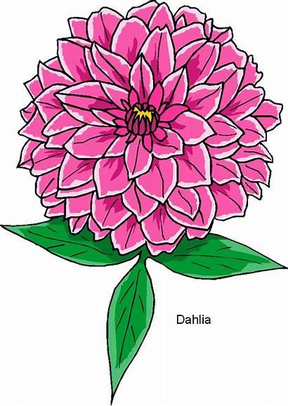Flower Dahlia Clip Clipart Microsoft Flowers Carnation
