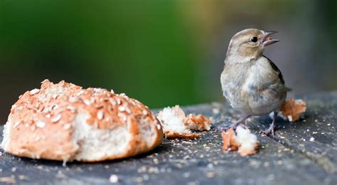 how to use breadcrumbs the right way idevie