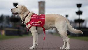 Cancer screening trial using sniffer dogs needs more funds ...