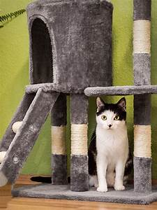 Was Brauchen Katzen : darum brauchen katzen einen kratzbaum ~ Lizthompson.info Haus und Dekorationen