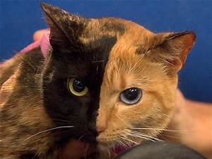 Mews and Nips: Venus the Chimera Cat