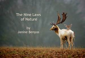 Biomimicry  Nine Laws Of Nature And Examples