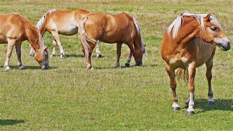durchfall und kotwasser beim pferd kraeuter als ansatz