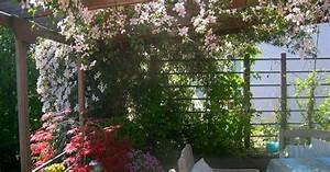 Pflanzen Für Dachterrasse : gestaltungsideen f r balkon und dachterrasse mein ~ Michelbontemps.com Haus und Dekorationen