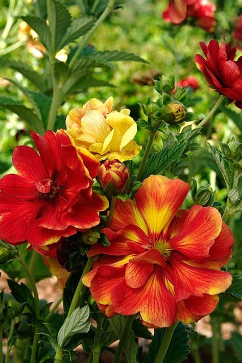 zone 4 flowers 55 best images about gardening in zone 4 on pinterest gardens shade plants and 4 in