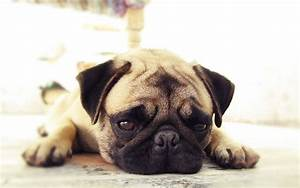 How To Help Your Pet With Separation Anxiety
