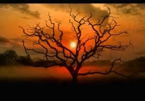 beautiful and serene tree photographs stockvault net