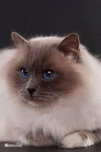 cat images uranos gallery