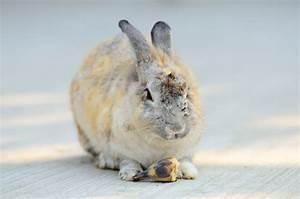 Kaninchenkäfig Für 2 Kaninchen : banane f r kaninchen das sollten sie beachten ~ Frokenaadalensverden.com Haus und Dekorationen
