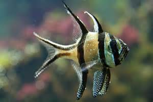 Tropical Freshwater Aquarium Fish