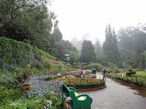 PLEASING PICS: Botanical Garden, Ooty, Tamil Nadu.