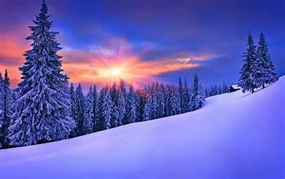 Winter Pine Forest Trees Snow Landscape Desktop