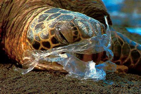 Impacts On Marine Animals