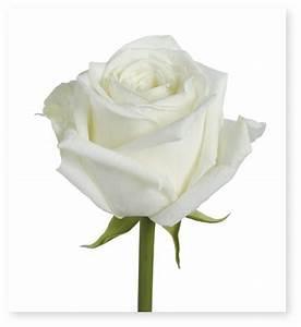 Fleur Rose Et Blanche : langage fleurs ~ Dallasstarsshop.com Idées de Décoration