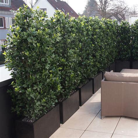 Die Hecke Natuerlicher Zaun Und Sichtschutz by K 252 Nstlicher Bambus Sichtschutz Pflanzen F 252 R Nassen Boden