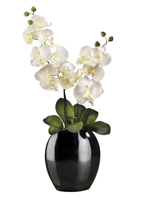 kunst orchidee im topf orchidee im topf in verschiedenen farben kunst