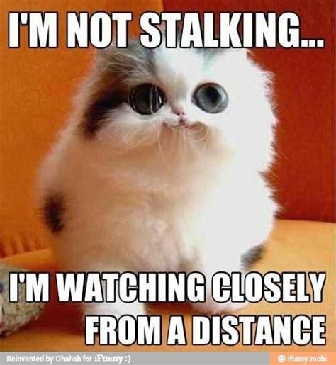 Funny Stalker Memes - best 58 stupid stalker images on pinterest humor