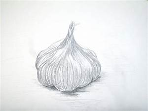 Garlic Drawing Images - Reverse Search