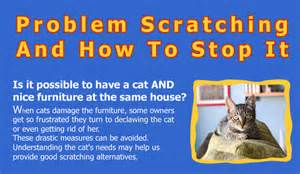 how to declaw a cat pros and cons of declawing cats hrfnd