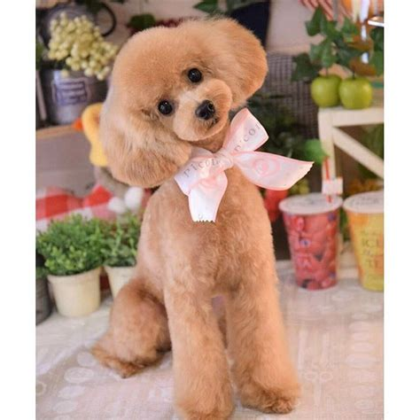 376 Best Images About Japanese Poodle Style On Pinterest