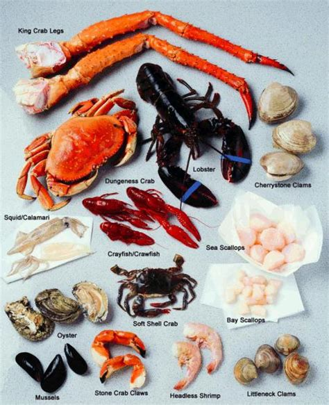 shellfish basics