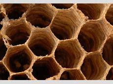Biomimicry, or