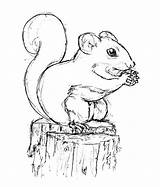 Squirrel Drawing Pages Coloring Drawings Sketch Printable Colouring Line Sketches Adults Animal Pencil Nut sketch template
