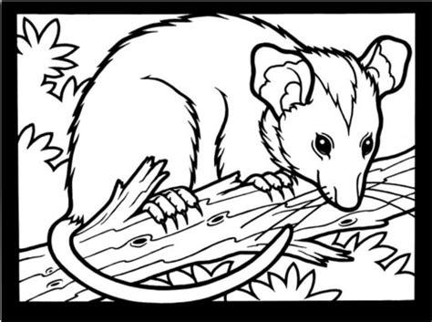 opossum coloring page supercoloringcom