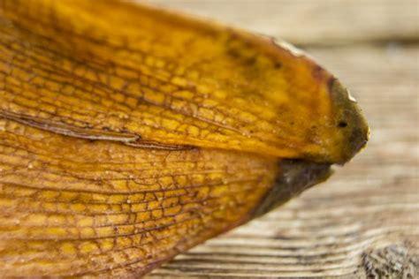 was bedeuten gelbe schmucklilie 187 pflanzen pflegen 220 berwintern und mehr