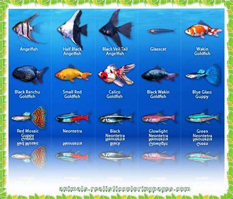 fish names fish names more photos