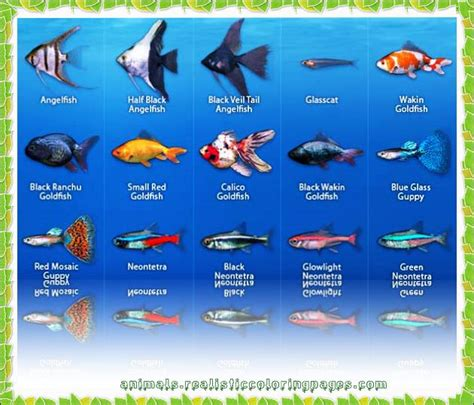 Freshwater Fish List Az With Pictures  Animals Name A To Z