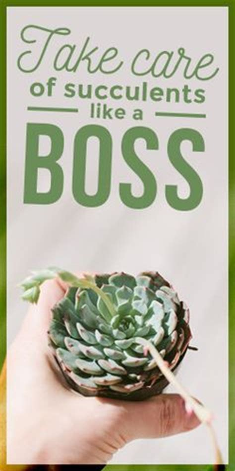 how to take care of a succulent succulents read more and tips on pinterest