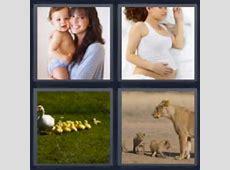 4 fotos 1 palabra leona con cachorros, patitos, emparazada