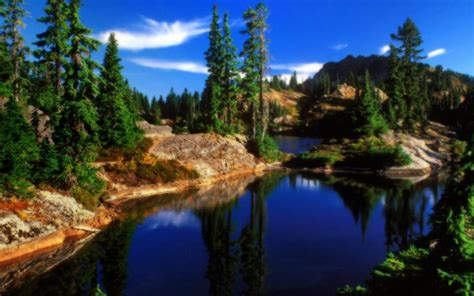 hd nature forestscape hdr wallpaper