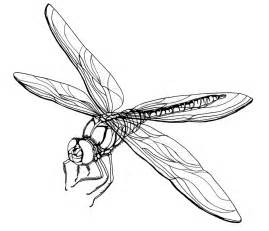 basic outlines of dragonflies simple dragonfly drawing clipart best