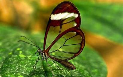 Butterfly Transparent Wallpapers Walls