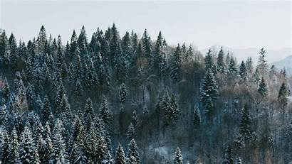 Forest Winter Trees Background Snowy Aerial 1080p