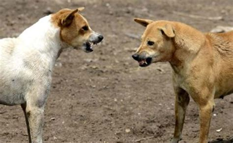 city   inclusive canines policy  curb stray dogs
