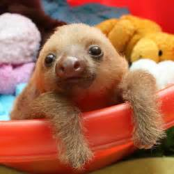 Baby Sloths with Teddy Bears