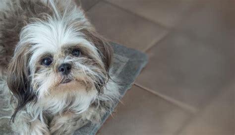 Cik ilgi dzīvo suņi un no kā tas atkarīgs - MansDraugs.lv - DELFI