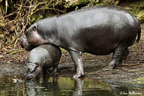 jan willemsen fotografie zoo overloon