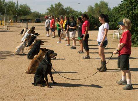 local obedience classes   pup williamson source