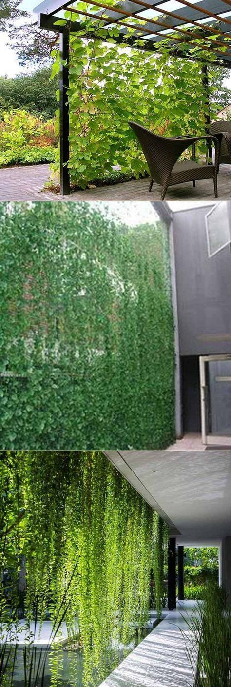 vine privacy screen    patio  yard  privacy  adding extra green