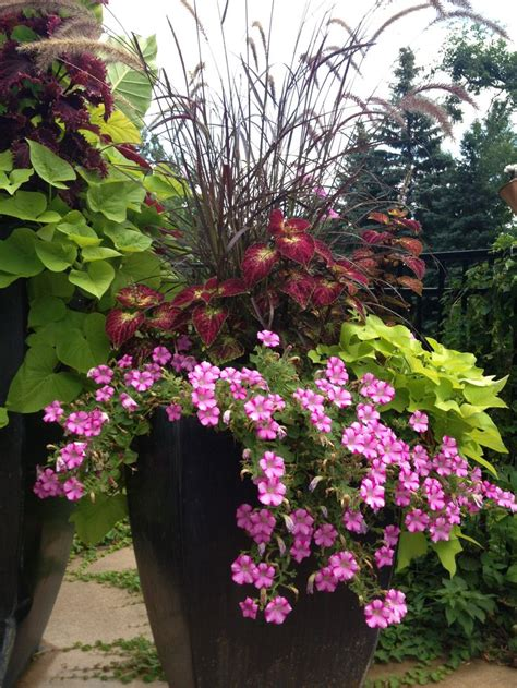 outdoor potted plants sun patio flowers full sun patio flowers pinterest sun flower and entryway