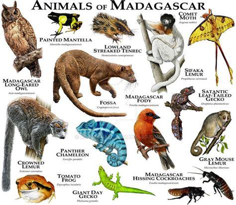 roger hall animal charts images  pinterest