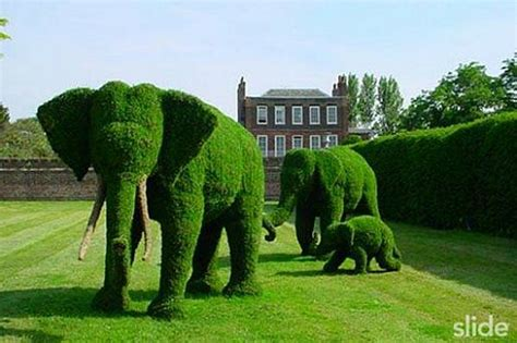 Cool Garden Topiary  Elephants, Flowers, Pigs, Peacock