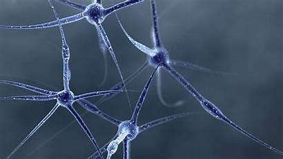 Neuron Wallpapers Cell Neurons Biology 4k Px